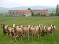 Détails : Week end détente au Gîte de la Ramière - Belmont sur Rance - Sud Aveyron